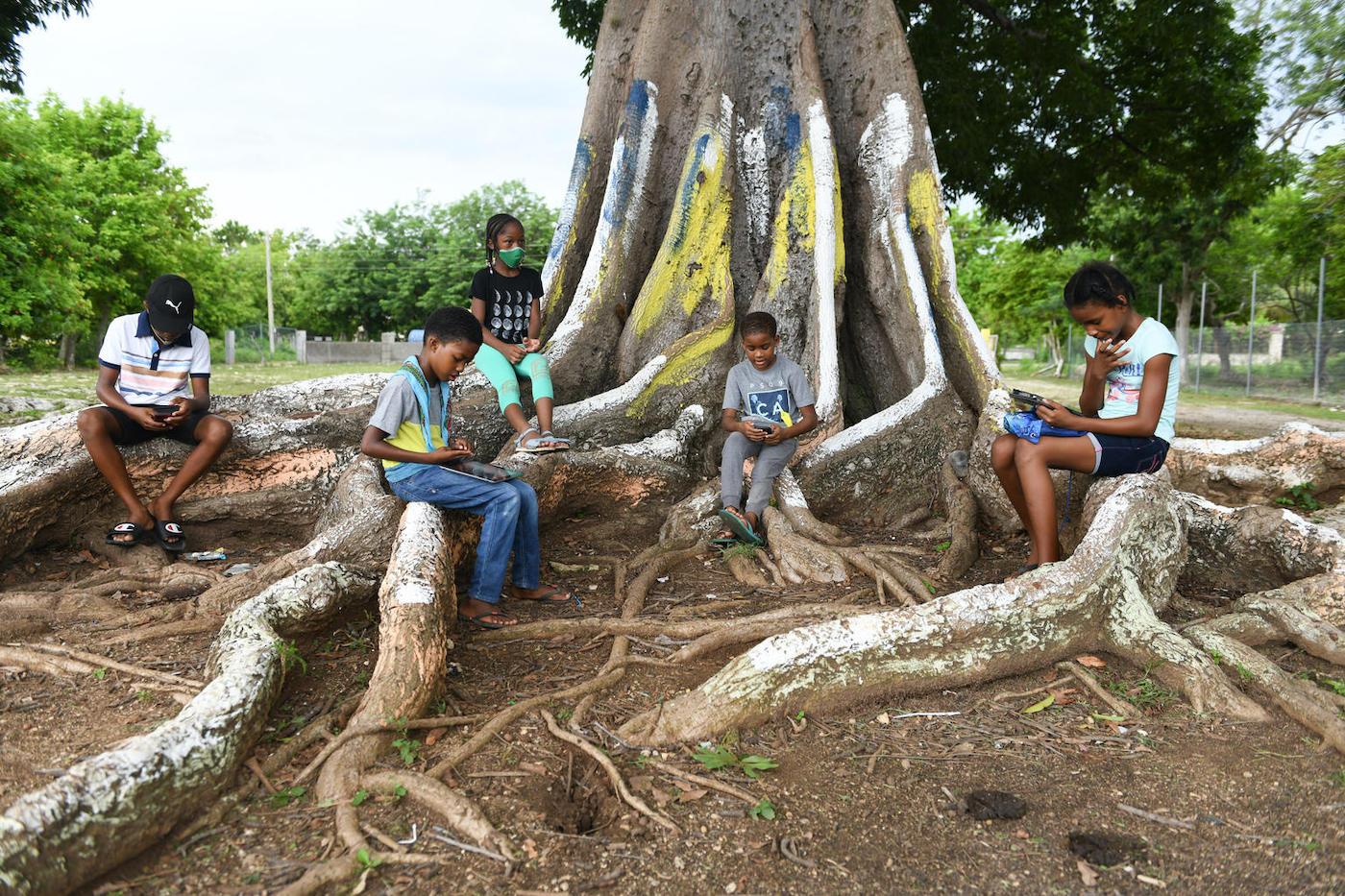 Photograph of students sitting under a tree to access the internet while observing the recommended social distancing at Little Bay Primary and Infant School in Westmoreland.