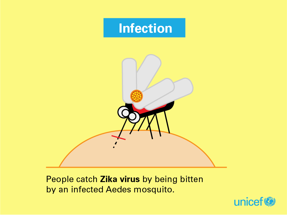 Zika Infographs for blog_Infection EN