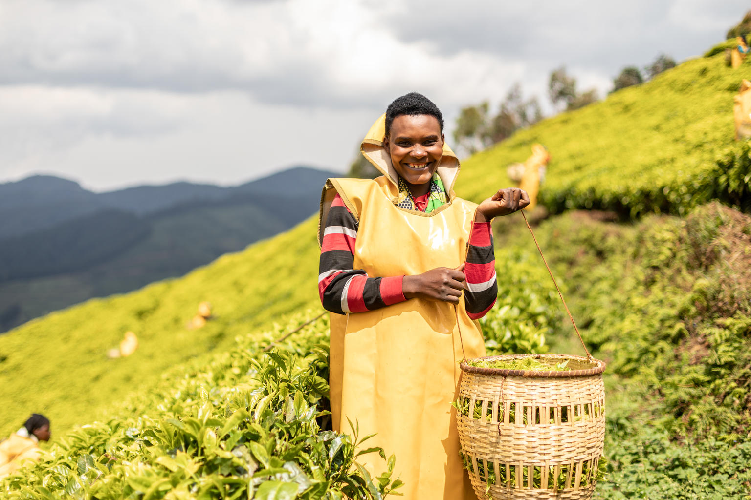 A woman on a hillside with a basket of tea leaves